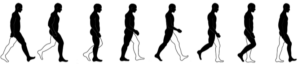 human walking gait illustration