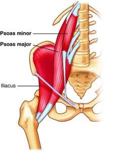 psoas muscle-skeletal doctor graphic